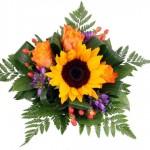 Blumenfee Sommer-Special Lachende Sonne