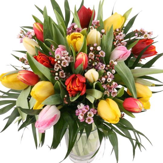20 bunte Tulpen als Strauß aufgebunden