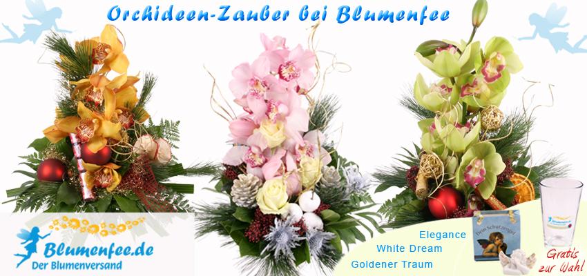 Weihnachts Orchideen bei Blumenfee zum Weihnachtsfest online bestellen und verschicken