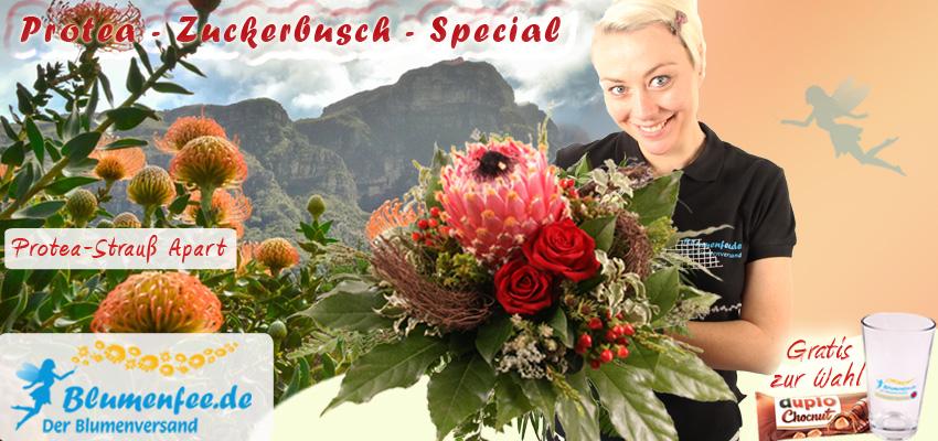 Protea Blumensträuße online bestellen und versenden