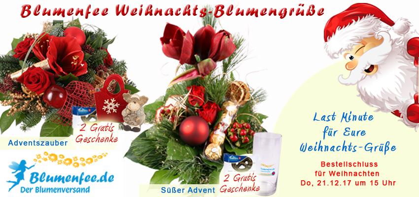 Blumenversand Weihnachten - Blumen zum Fest online versenden