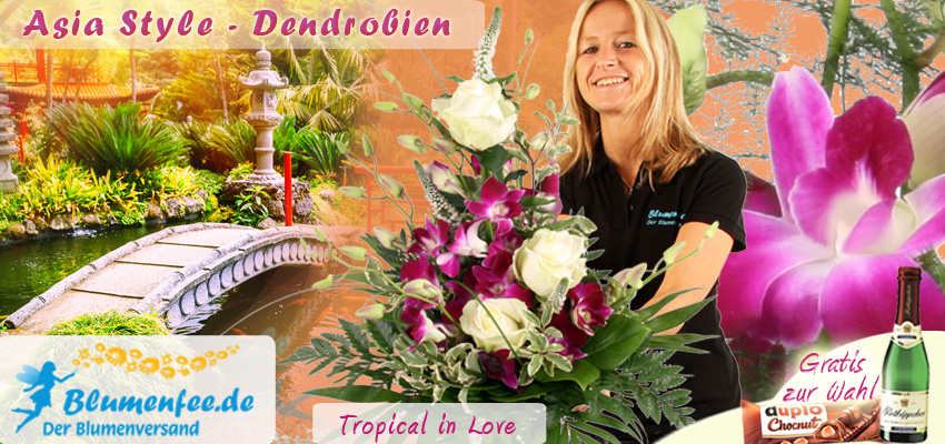 Orchideen online versenden