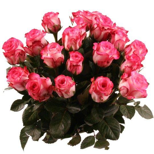 rosenversand sie w hlen farbe anzahl rosen online bestellen und verschicken mit www. Black Bedroom Furniture Sets. Home Design Ideas