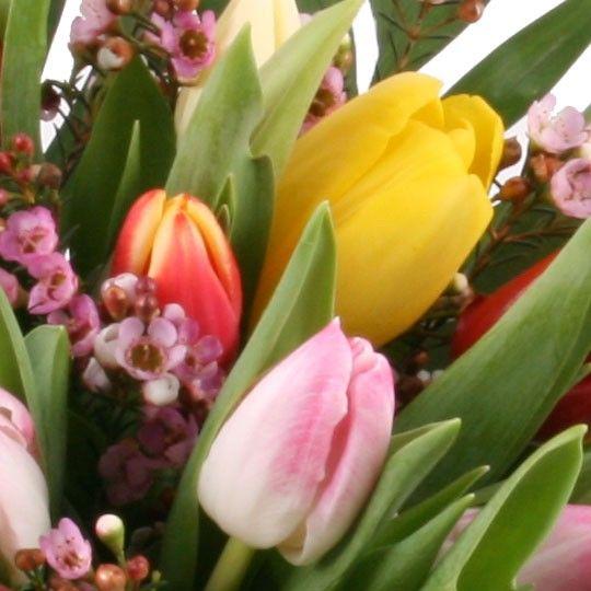 30 bunte tulpen tulpenversand blumenfee tulpen frisch und g nstig online verschicken. Black Bedroom Furniture Sets. Home Design Ideas
