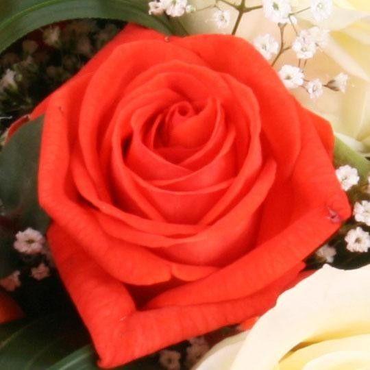 rosen strau mit wei en und orangen rosen mit gratiszugabe ihrer wahl online versenden. Black Bedroom Furniture Sets. Home Design Ideas