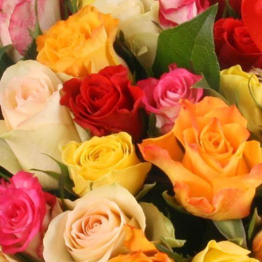 50 rosen im mix mit gratiszugabe ihrer wahl blumen. Black Bedroom Furniture Sets. Home Design Ideas