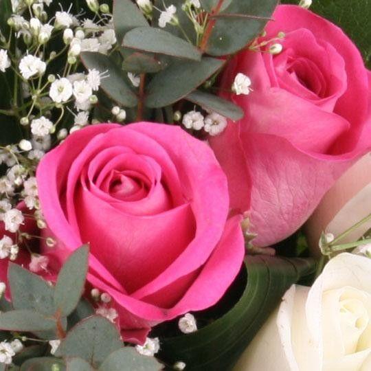 rosen strau pink lady mit 3 gratiszugaben ihrer wahl. Black Bedroom Furniture Sets. Home Design Ideas