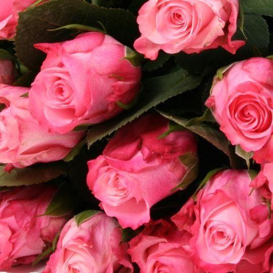 rosa rosen im bund rosen online deutschlandweit. Black Bedroom Furniture Sets. Home Design Ideas