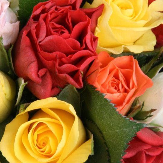 blumenstrau 40 rosen im farb mix mit 3 gratiszugaben. Black Bedroom Furniture Sets. Home Design Ideas