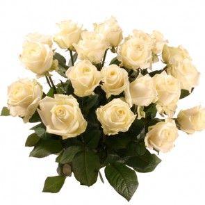 Rosen mit Rabatt - Sie wählen Farbe & Anzahl - Blumen online deutschlandweit versenden  mit www.blumenfee.de - dem Blumenversand Rosen sind die Boten reiner Liebe. Wie ein zärtlicher Hauch umschmeicheln die Gedanken das Herz und das Hirn des Beschenkten: