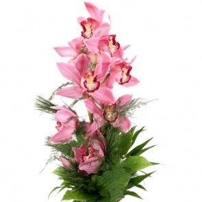 Orchideen-Magie mit Gratiszugabe Ihrer Wahl – Blumen online deutschlandweit versenden  mit www.blumenfee.de - dem Blumenversand
