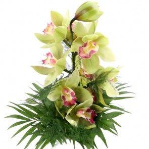 Orchidee - Traum in Grün online verschicken  mit blumenfee.de - dem Blumenversand