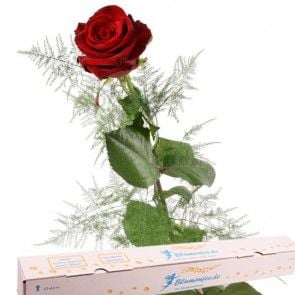 Rote Rose - Blumen online versenden  mit www.blumenfee.de - dem Blumenversand