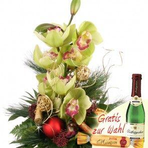 Orchidee Weihnachtlich / Orchidee zum Adent online bestellen und schnell und günstig versenden beim Testsieger