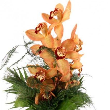 Orchideen-Traum mit Gratiszugabe Ihrer Wahl – Blumen online deutschlandweit versenden  mit www.blumenfee.de - dem Blumenversand