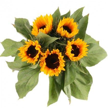 Günstige Sonnenblumen im Bund – Sommer Blumen online verschicken mit Blumenfee - Dem Blumenversand