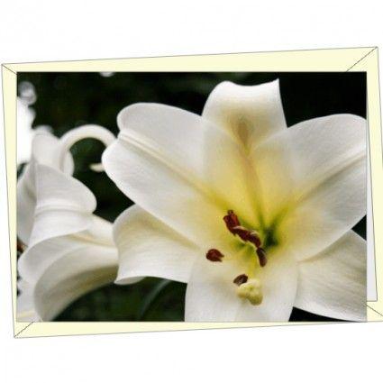 Hochwertige Motivgrußkarte als Ergänzung zu Ihrem Blumenstrauß online versenden mit dem Blumenfee Blumenversand.