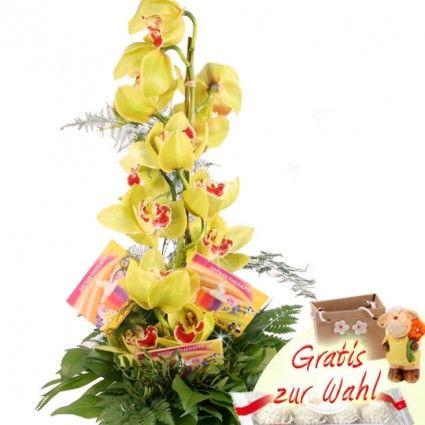 Blumenfee Goldmännchen Special online verschicken mit Blumenfee - dem schnellen und günstigen Blumenversand..