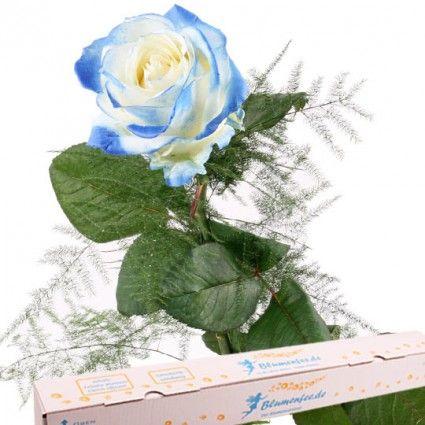 Rosen - Blumen online versenden mit www.blumenfee.de - dem Blumenversand