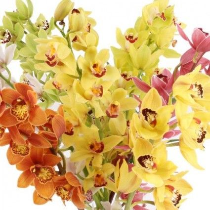 Orchideen (Cymbidien) mit Rabatt - Sie wählen Farbe & Anzahl - Blumen online deutschlandweit verschicken  mit www.blumenfee.de - dem Blumenversand