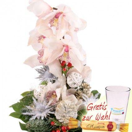 Orchidee Weihnachtlich - Märchenhaft aufgebunden in der Adventszeit - online bestellen beim Testsieger
