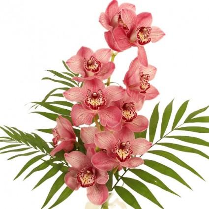 Orchideen Rispe mit beigelegten Palmblättern zum selbst arrangieren