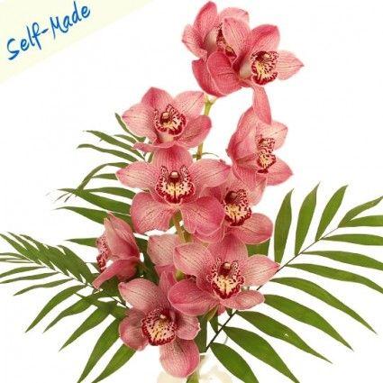 Orchidee Rispe mit Grün / Farbe Zufallswahl - Self Made