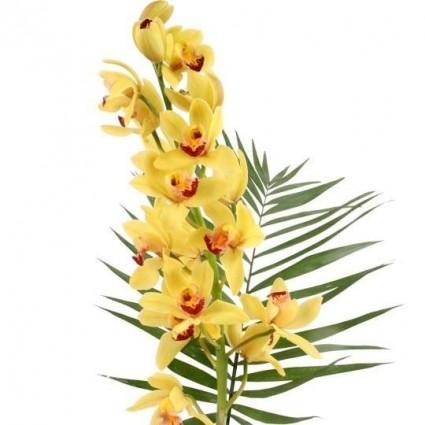 Orchideen Rispe kleinblütig mit beigelegtem Grün online verschicken mit Blumenfee - Der Blumenversand