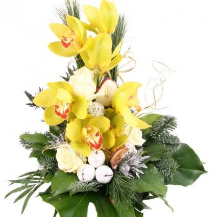 Weihnachts-Orchidee Zauberland online versenden mit Blumenfee