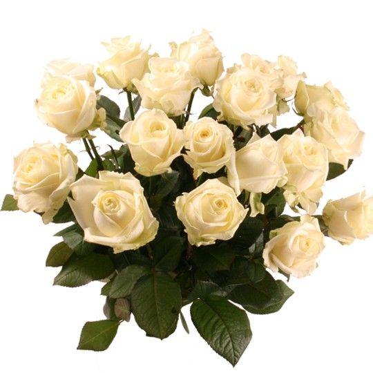 Langstielige Rosen mit Rabatt Farbe Anzahl wählbar ohne Rot