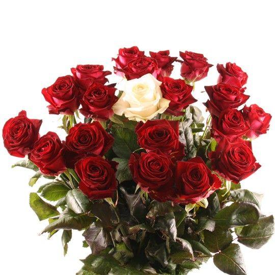 Langstielige Premium Rosen mit Rabatt Farbe Anzahl wählbar Alle Farben auf Rechnung bestellen