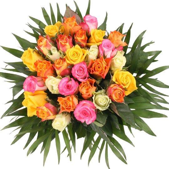 Rosen online mit Rabatt Sie wählen Farbe Anzahl ohne Rot auf Rechnung bestellen