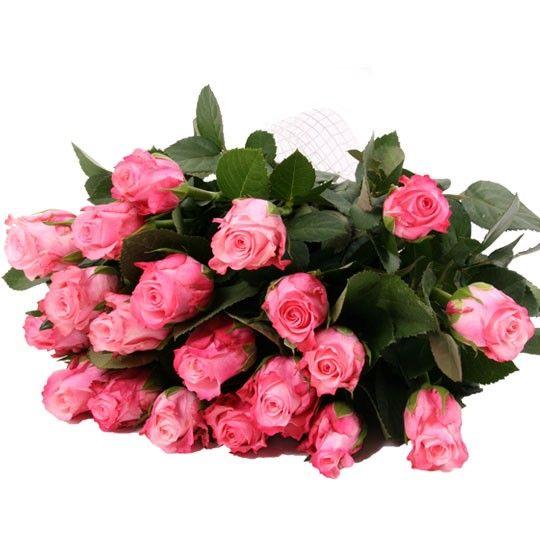 Rosa Rosen im Bund mit Schleife