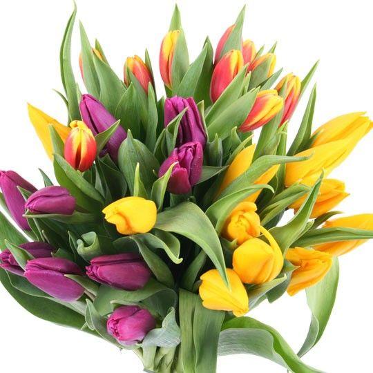 Tulpen im 10'er Bund 20 Stück 15,90 30 Stück 22,35 40 Stück 27,80 auf Rechnung bestellen
