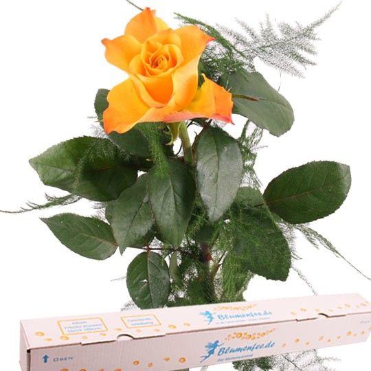 Orange Premium Rose mit Spezial Geschenkbox auf Rechnung bestellen