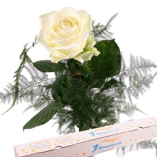Weiße Premium Rose mit Spezial Geschenkbox auf Rechnung bestellen