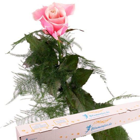 Rosa Premium Rose mit Spezial Geschenkbox auf Rechnung bestellen