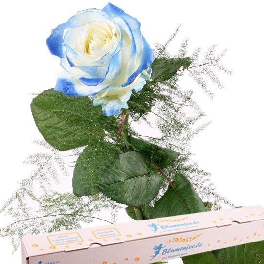 Blaue Premium Rose mit Spezial Geschenkbox auf Rechnung bestellen