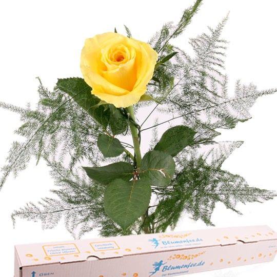 Gelbe Premium Rose mit Spezial Geschenkbox auf Rechnung bestellen