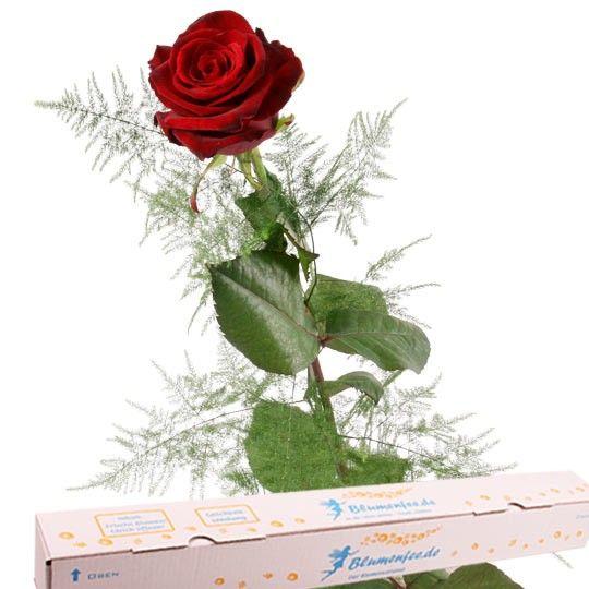 Rote Premium Rose mit Spezial Geschenkbox auf Rechnung bestellen