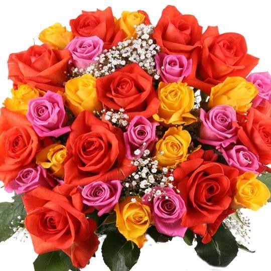 Langstielige Rosen mit Rabatt Farbe Anzahl wählbar Ohne Rot ab 1,79 auf Rechnung bestellen