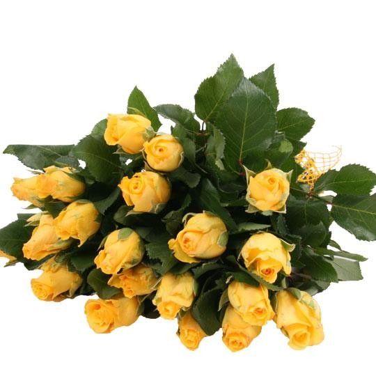 Gelbe Rosen im Bund mit Schleife auf Rechnung bestellen