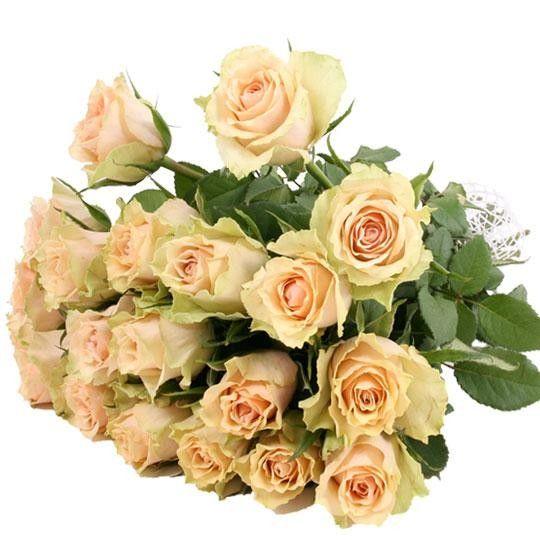 Creme weiße Rosen im Bund mit Schleife