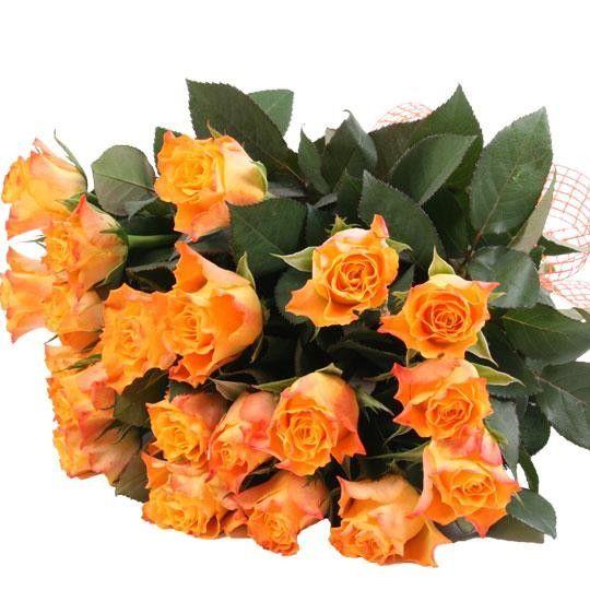 Orange Rosen im Bund mit Schleife