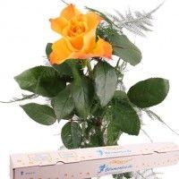 Orange Premium Rose mit Spezial-Geschenkbox