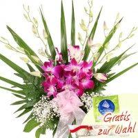 Beautiful Power - Orchideen-Special Dendrobien