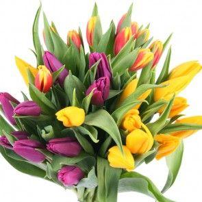 Tulpen im Bund – Tulpen online verschicken  mit blumenfee.de